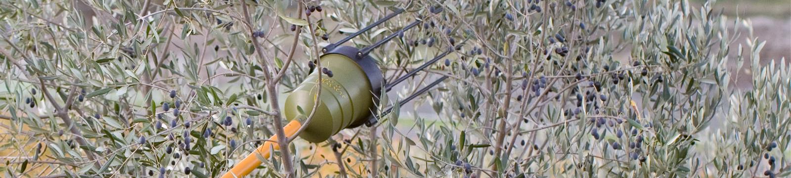 1600x360-oliveto